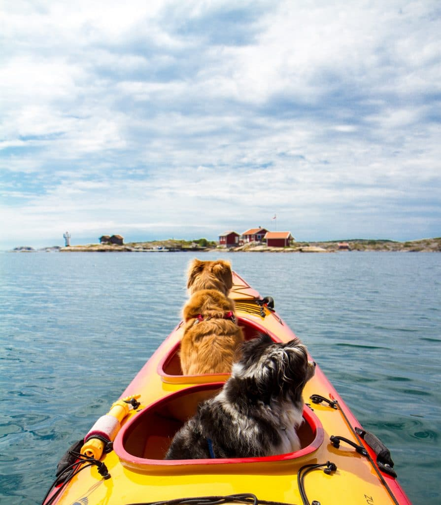 two dogs riding a kayak